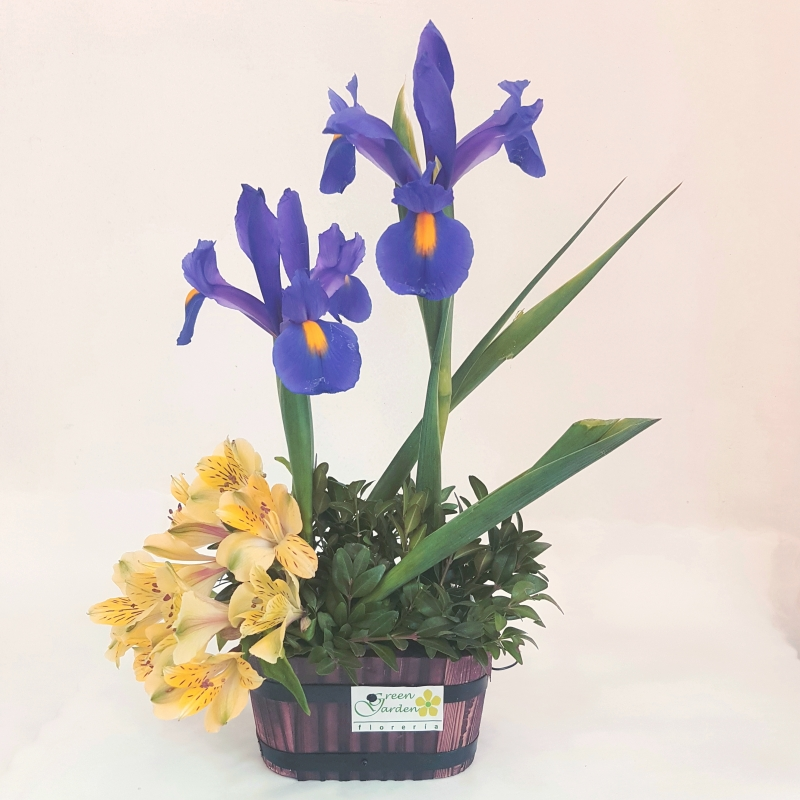 DESTELLO DE IRIS